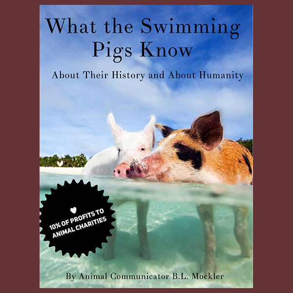 What the Swimming Pigs Know